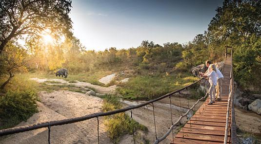 Big Five Elephant Game walks Sabi Sand Game Reserve Dulini Safari Lodge Luxury Safari Lodge Bookings South Africa