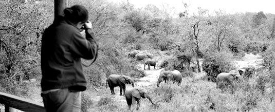 Elephant Sighting Founders Camp Londolozi Private Game Reserve Sabi Sand Private Game Reserve Accommodation Booking