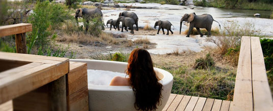 Suite view Elephant Sighting Private Granite Suites Londolozi Private Game Reserve Sabi Sand Private Game Reserve Accommodation Booking