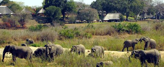 Elephant Sighting Main Lodge Mala Mala Main Camp Mala Mala Private Game Reserve Sabi Sand Private Game Reserve Accommodation Booking