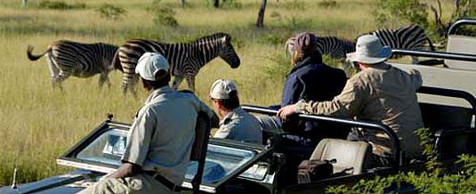 Zebra Sighting Game Drive Sabi Sabi Private Game Reserve Sabi Sands Reserve Luxury Accommodation