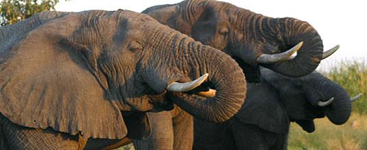 Ulusaba Cliff Lodge Luxury Safari Lodge Bookings Elephant Sighting Game Drives Ulusaba Private Game Reserve Sabi Sand Private Game Reserve
