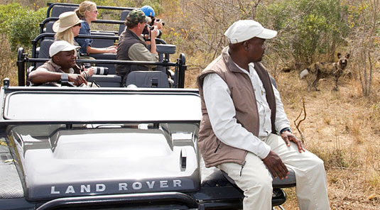 Game Drive Wild Dog Sabi Sand Game Reserve Dulini Safari Lodge Luxury Safari Lodge Bookings South Africa