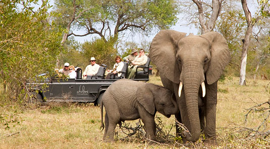 Big Five Elephant Calf Game Drives Sabi Sand Game Reserve Dulini Safari Lodge Luxury Safari Lodge Bookings South Africa