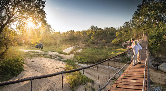 Big Five Elephant Game walks Sabi Sand Game Reserve Dulini Safari Lodge Luxury Safari Lodge Bookings South Africa