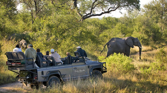 Sabi Sand Elephant Big Five Safari Game Drives Ivory Lodge Lion Sands Sabi Sand Game Reserve South Africa