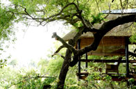 Londolozi Private Game Reserve - Tree Camp
