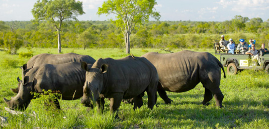 Rhino Sighting Mala Mala Lodges Mala Mala Private Game Reserve Sabi Sand Private Game Reserve Accommodation Booking