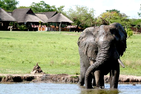 Luxury Safari Lodge Bookings,Nkorho Bush Main Lodge,Elephant,Waterhole,Sabi Sands Private Game Reserve,Kruger National Park,Accommodation Booking