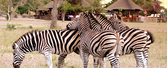 Zebra Sighting,Main Lodge,Nkorho Bush Lodge,Sabi Sands Private Game Reserve,Kruger National Park,Accommodation Booking