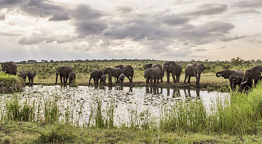 Elephants herd waterhole Sighting Game Drives Luxury Accommodation Savanna Private Game Reserve Sabi Sands Reserve