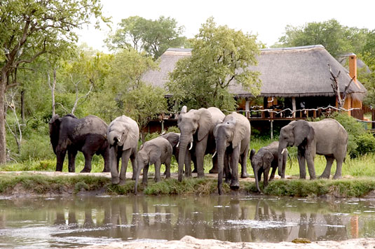 Simbambili Game Lodge Sabi Sands Luxury Safari Lodge Bookings Main Lodge Elephant herd waterhole Luxury Accommodation Sabi Sands Reserve Accommodation bookings