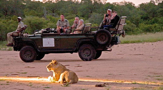 daily big 5 game drives Sabi Sands Luxury Safari Lodge Simbambili Game Lodge Luxury Accommodation bookings Sabi Sands Reserve