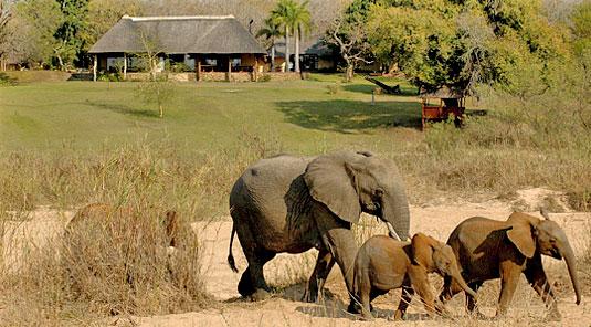 Main Lodge Elephants Inyati Game Lodge Sabi Sand Game Reserve Luxury Safari  Lodge Accommodation Booking